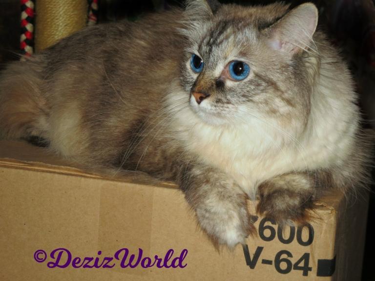 Dezi, lays on a box -selfie