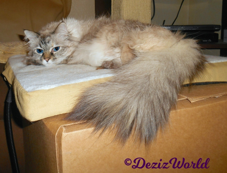 Dezi lays on cat mat on box