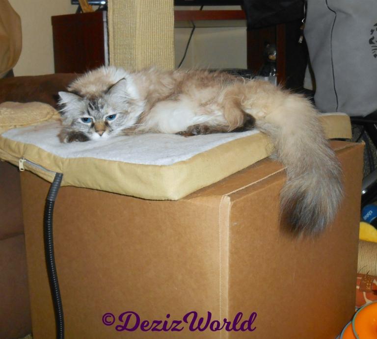 Dezi lays on cat mat on box