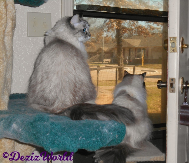 Dezi and Raena look out door from perches