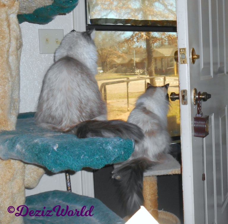 Dezi and Raena look out door