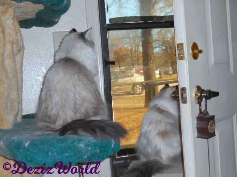 Dezi and Raena look out door