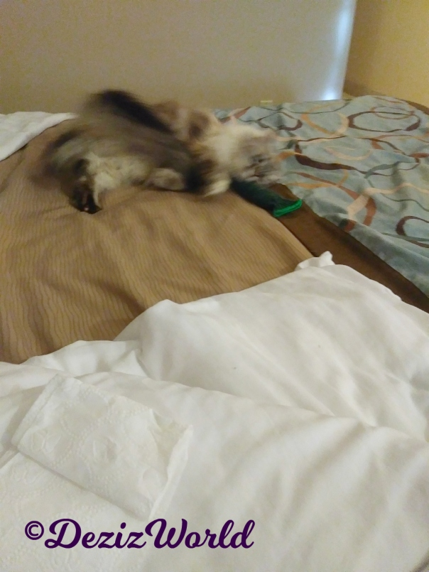 Blooper-Dezi rolls on hotel bed