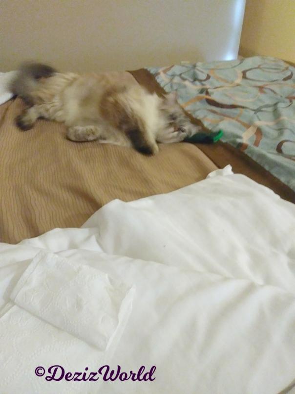 Dezi rolls on bed