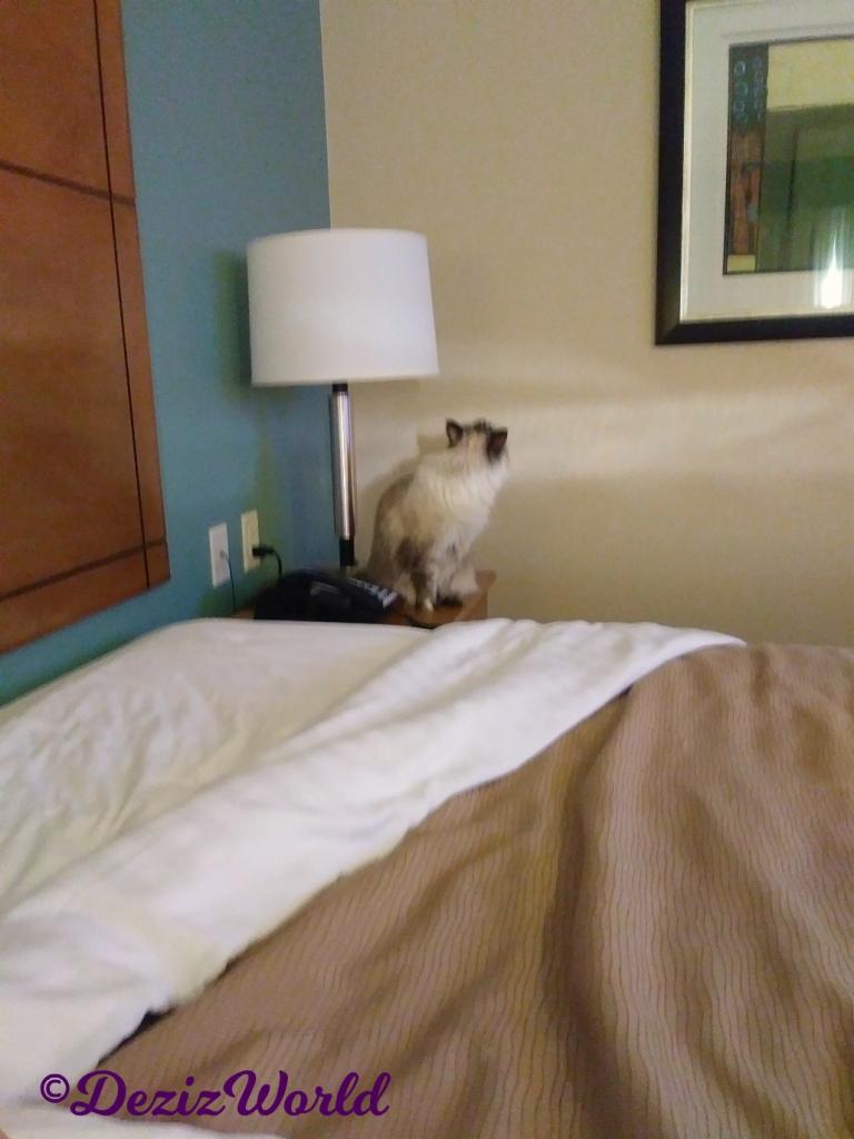Dezi sits on bedside table