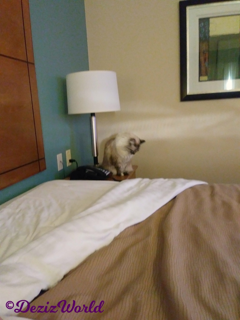 Dezi sits on table by bed looking down