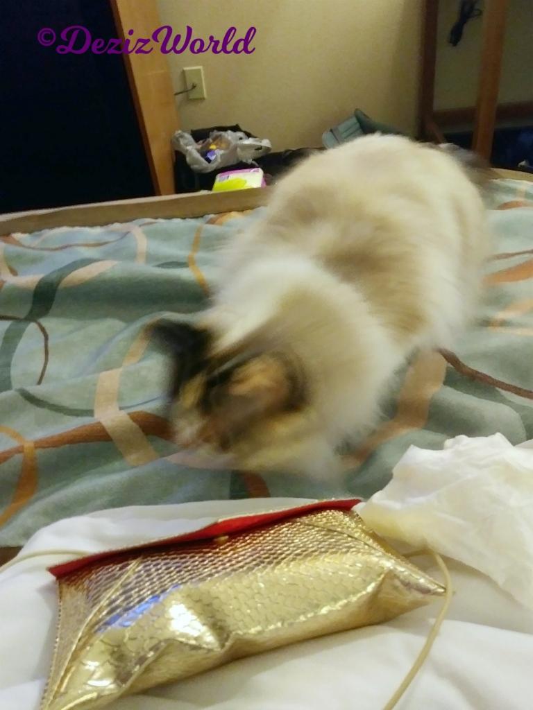 Blooper-Raena on hotel bed blurry