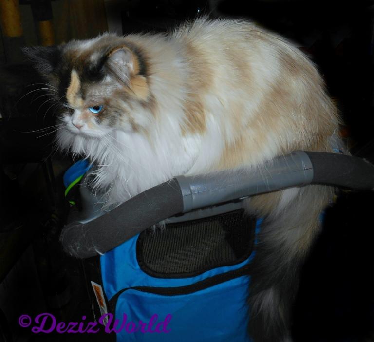 Raena lays on stroller
