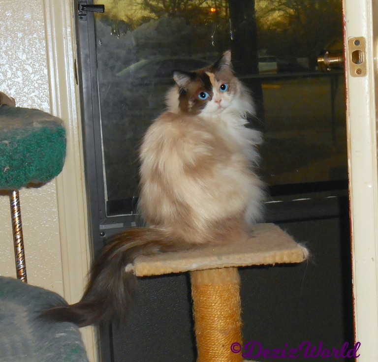 Raena looks back from perch at door