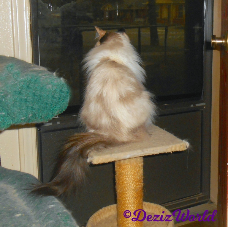 Raena looks out door from cat perch