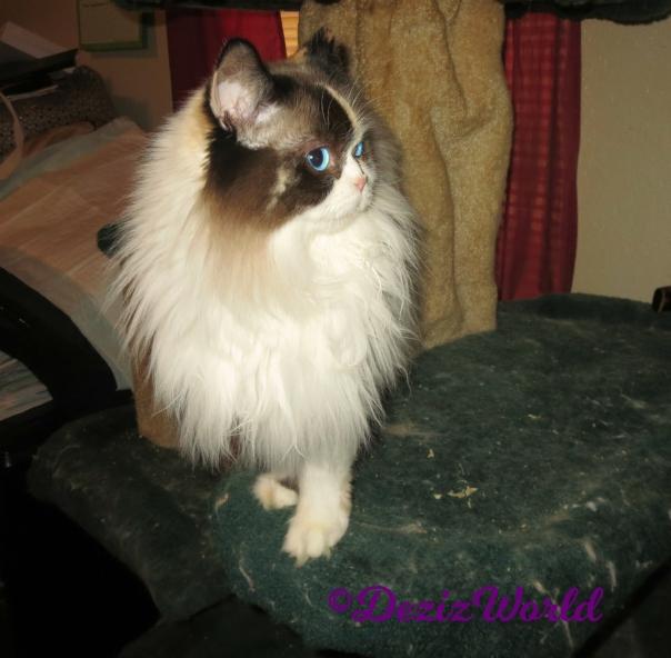 Raena stands on cat tree profile-selfie