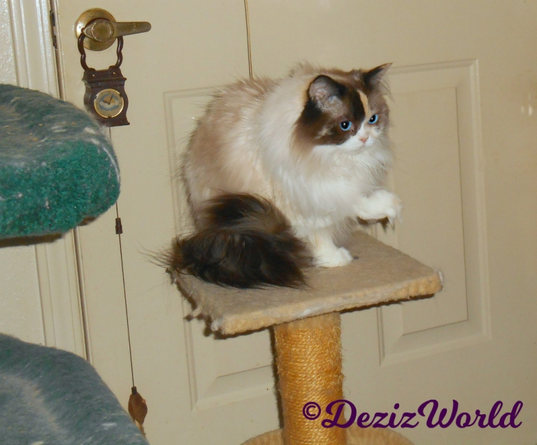 Raena sits with paw up on perch