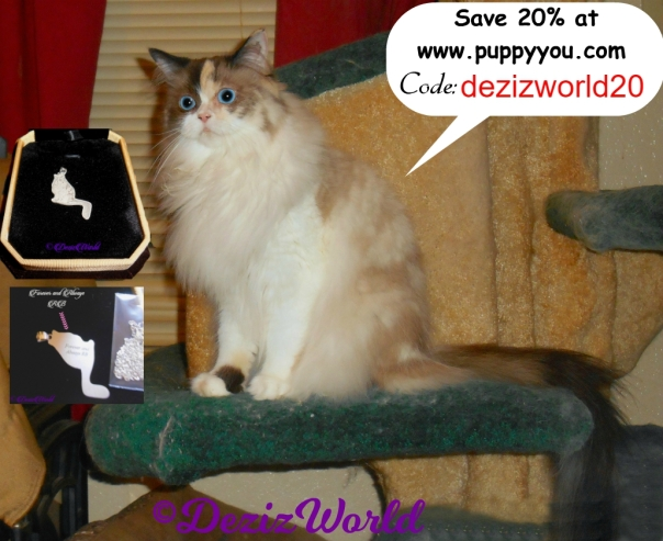 Raena sitting on cat tree with pendant and discount coe for Puppy You