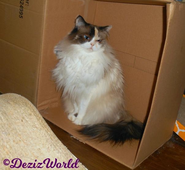 Raena sits pretty in box