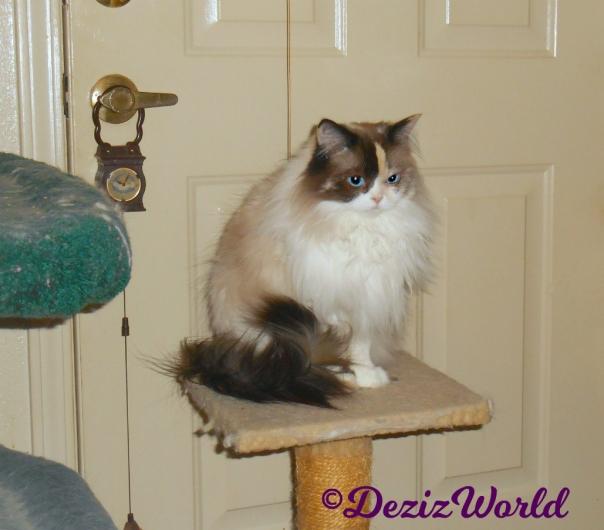 Raena sits pretty on perch