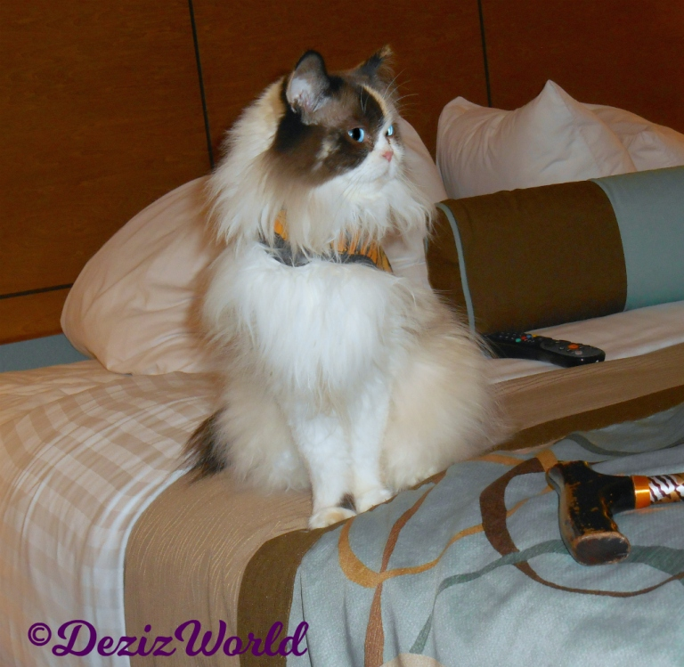 Raena sits pretty on hotel bed