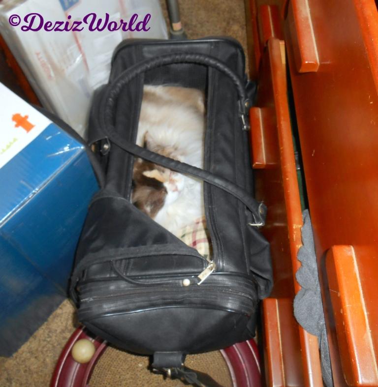 Raena sleeps in carrier