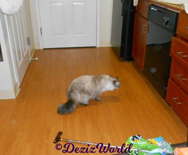 Dezi investigates the dishwasher