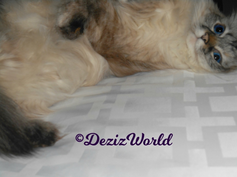 Dezi lays on bed, selfie