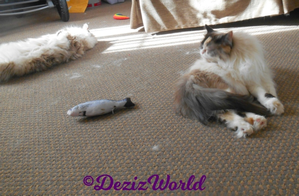 Dezi lays in sun puddle while Raena bathes