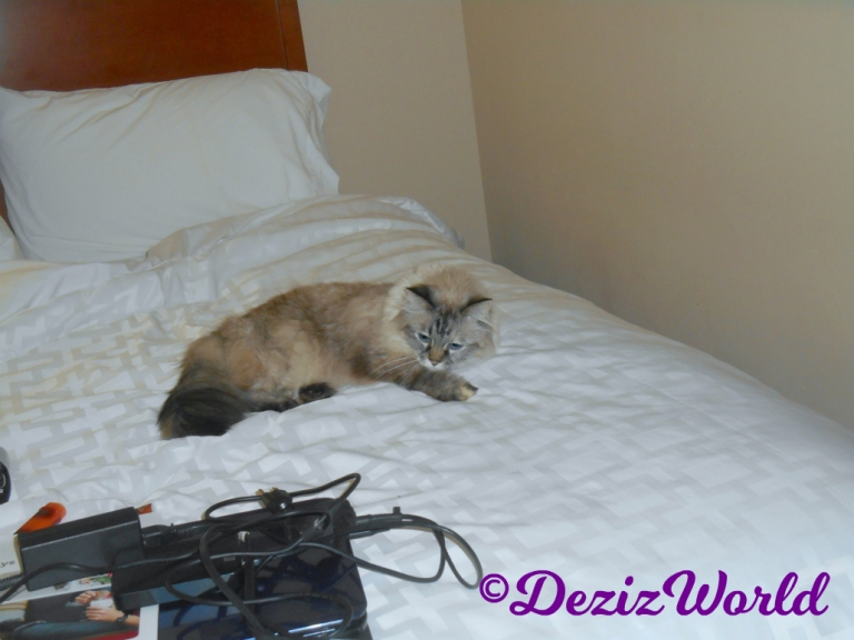 Dezi lays on hotel bed day 1