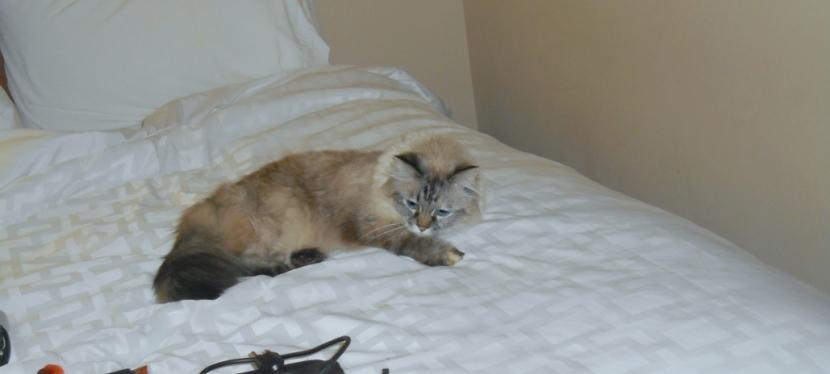 Feline Furiday Update
