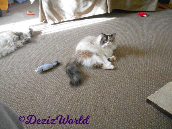 Dezi and Raena lay in sun puddle