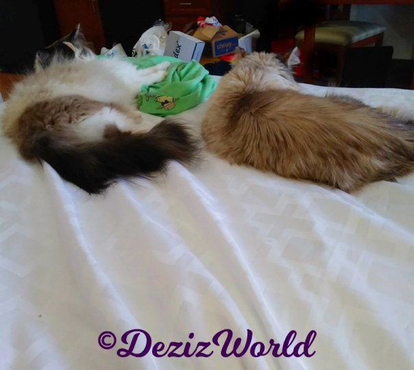 Dezi and Raena lay lovingly on the hotel bed together