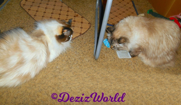 Dezi and Raena play with the Made with Love nip toys sent by Ellen
