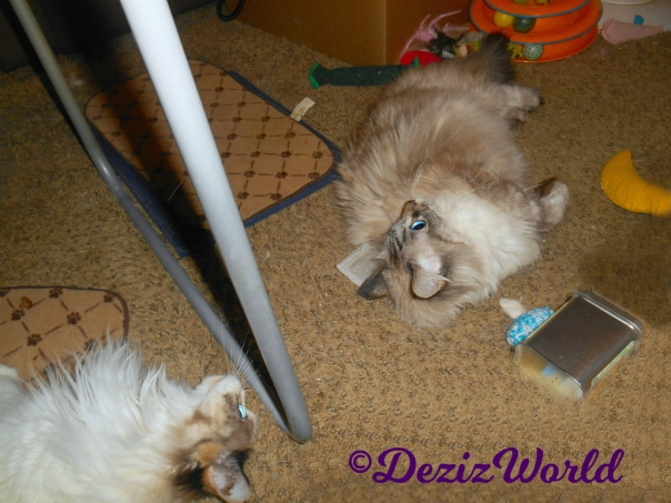 Dezi and Raena play with Made with Love nip toys by Ellen