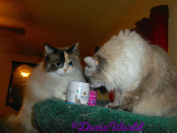 Dezi and Raena check out the Scruffy Paws Vitalize supplements atop the cat tree