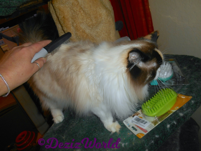 Raena geets combed with new grooming tools, gift from Susan