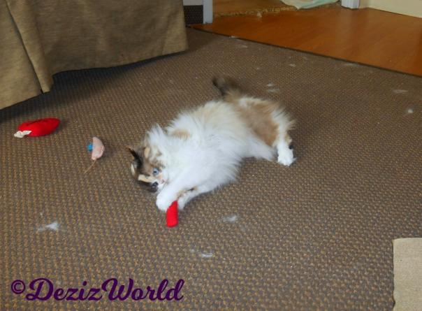 Raena plays with Trixie Kat toys