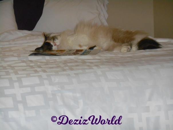 Raena sleeps on the hotel bed