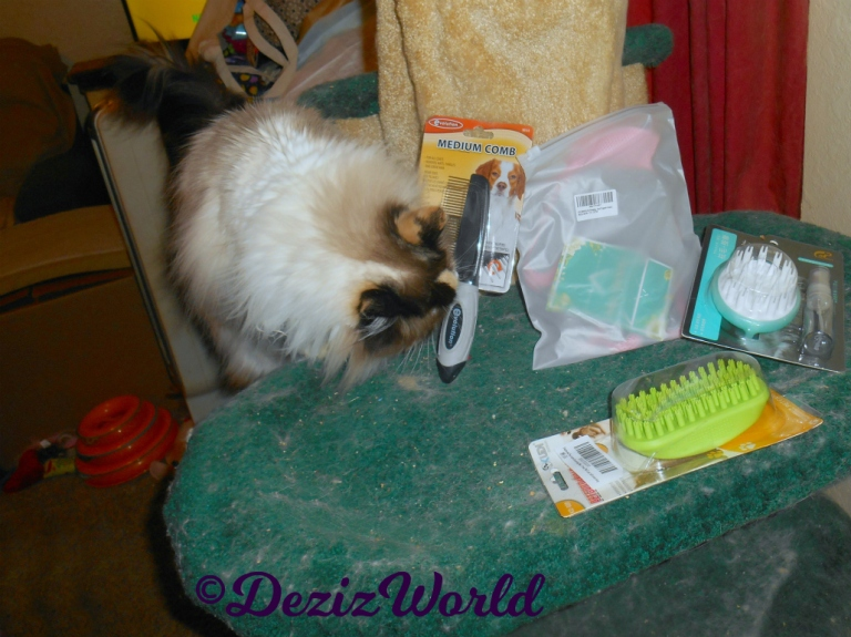 Raena checks out the grooming tool gifts from Susan
