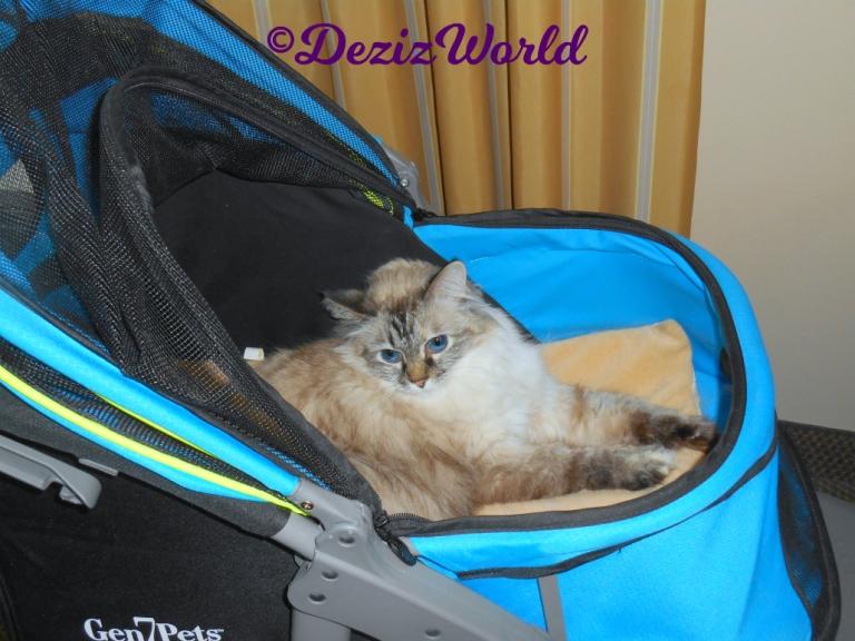 Dezi lays in stroller selfie