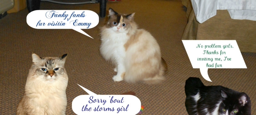 Chatting Cats: Our Playdate With Emmy