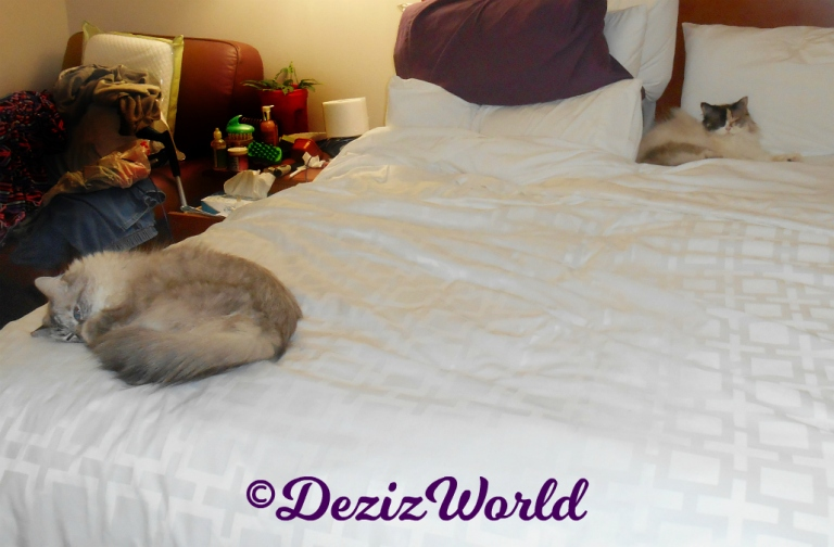 Dezi and Raena sleep in hotel bed