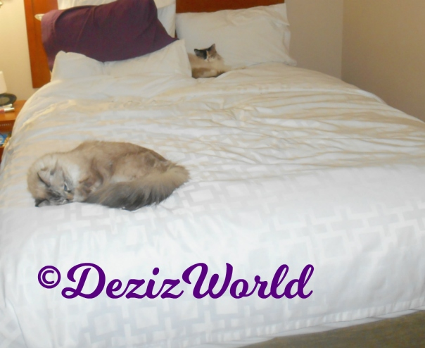 Dezi and Raena sleep on hotel bed