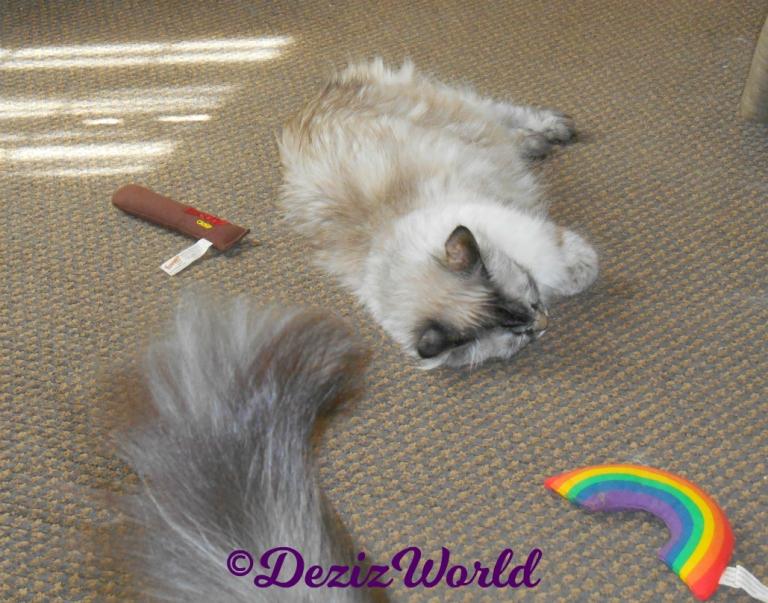 Dezi sleeps on hotel floor