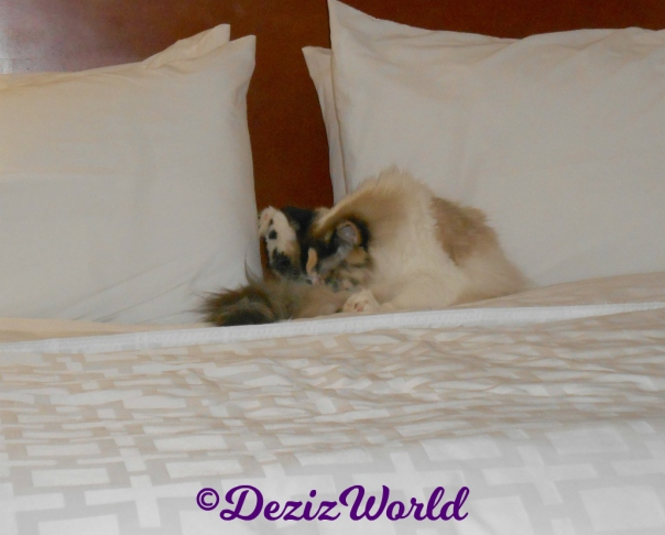 Raena bathes on hotel bed