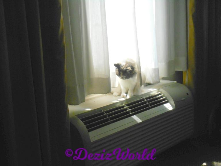 Raena sits in hotel window