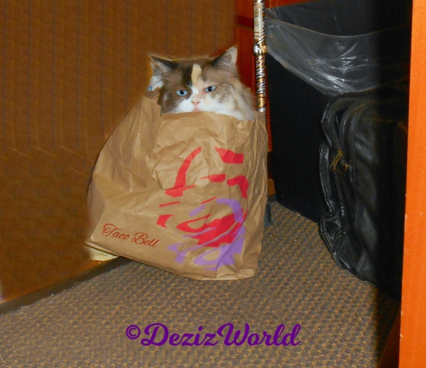 Raena sits in toco bell bag