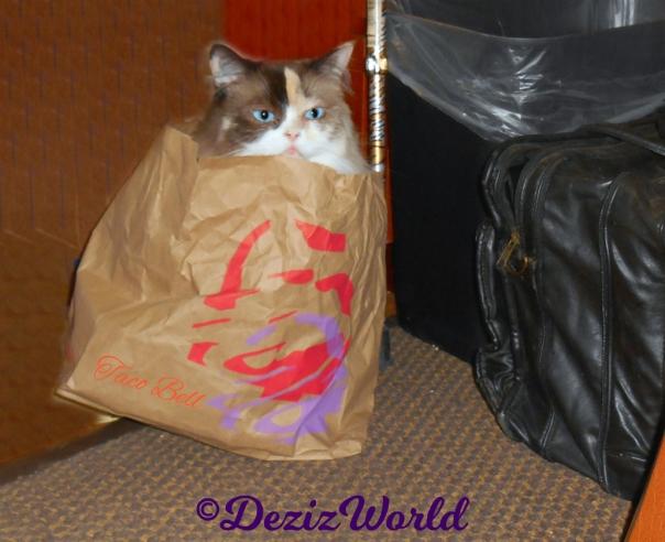 Raena sits in taco bell bag selfie