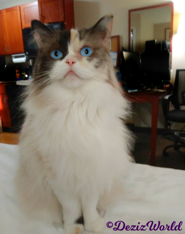 Raena sits pretty on hotel bed, selfie