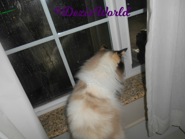 Raena looks out window at storm