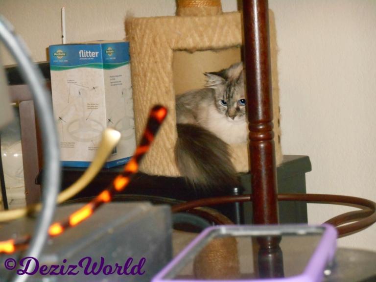 Dezi lays in small perch