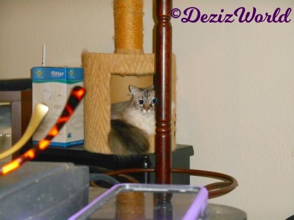 Dezi lays in small perch amid boxes