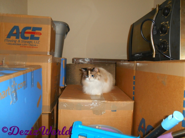 Raena lays on boxes in dining room