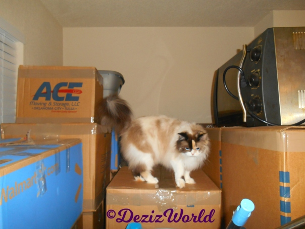 Raena stands on boxes in dining room